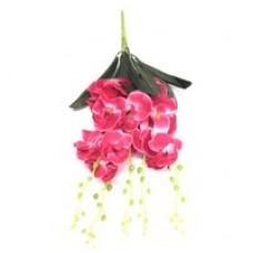 Фаленопсис (розовый)  1шт.